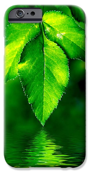Leaves iPhone Cases - Natural leaves background iPhone Case by Michal Bednarek