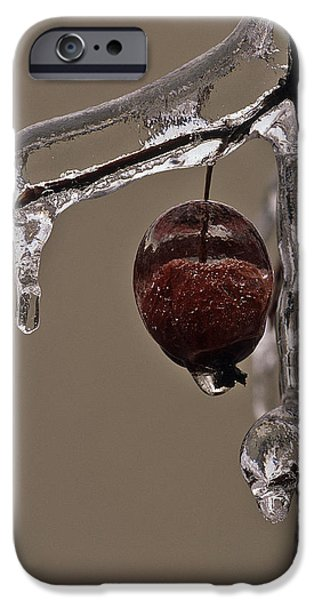 Ice Wine iPhone Cases - Natures Candy Apple iPhone Case by Tony Beck