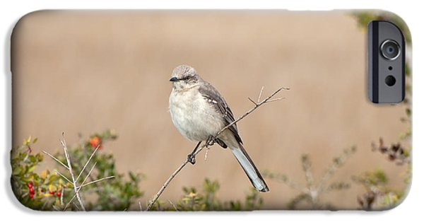 Beauty Mark iPhone Cases - Northern Mockingbird iPhone Case by Rich Leighton