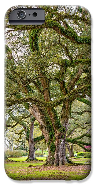 Oak Alley Plantation iPhone Cases - Oak Alley Plantation iPhone Case by Steve Harrington