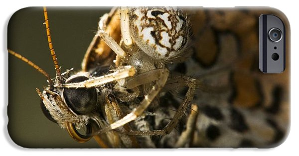 Butterfly Prey iPhone Cases - Oak Spider And Prey iPhone Case by Paul Harcourt Davies