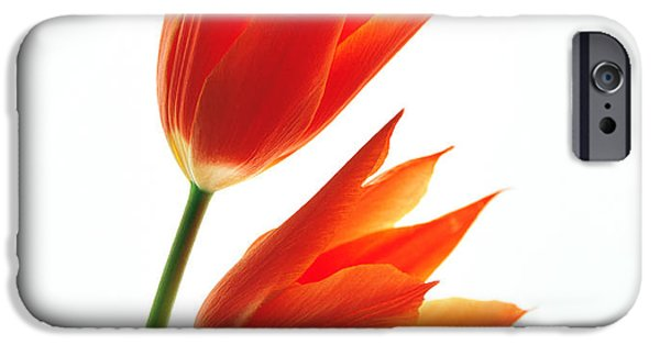 Cut-outs iPhone Cases - Orange Flowers Against White Background iPhone Case by Panoramic Images