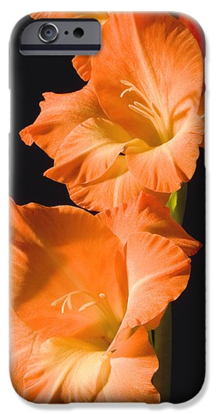 Gladioli iPhone Cases - Orange Gladiolus Flower iPhone Case by Keith Webber Jr