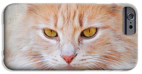 Orange Tabby iPhone Cases - Orange Tabby Cat iPhone Case by Jai Johnson