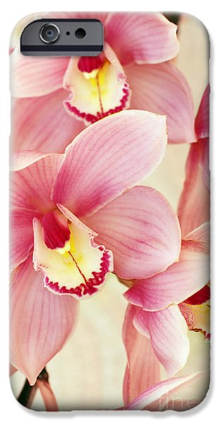 Petals iPhone Cases - Orchids iPhone Case by Carlos Caetano