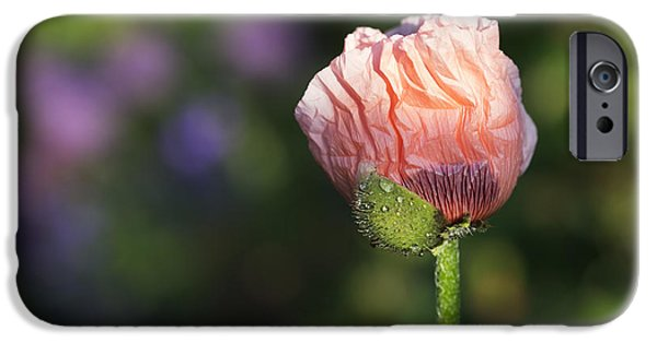 Anther iPhone Cases - Papaver orientale Carneum Poppy iPhone Case by Tim Gainey