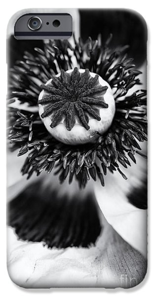 Anther iPhone Cases - Papaver Orientale Perrys White iPhone Case by Tim Gainey