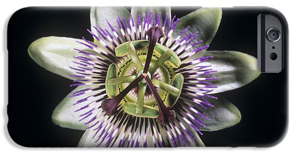 Passiflora iPhone Cases - Passion Flower iPhone Case by Martyn F. Chillmaid