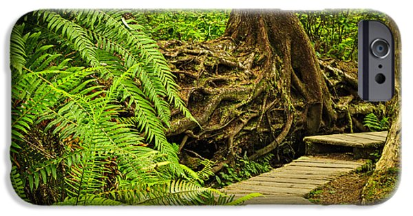 Rain iPhone Cases - Path in temperate rainforest iPhone Case by Elena Elisseeva