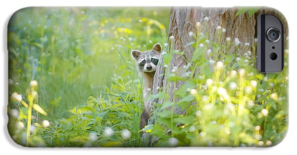 Animal Photographs iPhone Cases - Peek A Boo iPhone Case by Carrie Ann Grippo-Pike