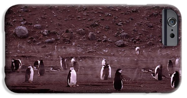 Sea Birds iPhone Cases - Penguins Make Their Way To The Colony iPhone Case by Panoramic Images
