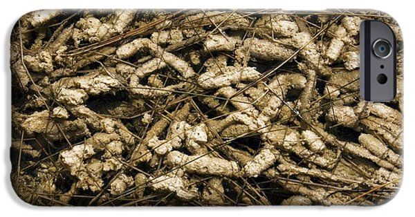 Alga iPhone Cases - Periphyton Algae Periphyton Sp iPhone Case by Bob Gibbons