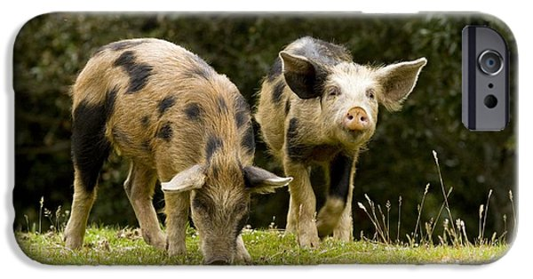 Piglets iPhone Cases - Piglets Foraging In Woodland iPhone Case by Bob Gibbons