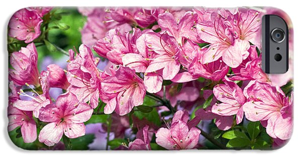 Garden Images iPhone Cases - Pink And Blue Rhododendron iPhone Case by Frank Tschakert