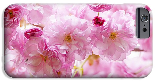 Pastel iPhone Cases - Pink cherry blossoms  iPhone Case by Elena Elisseeva