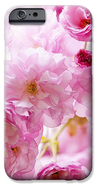 Pink cherry blossoms  iPhone Case by Elena Elisseeva