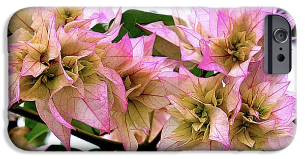 Metal Prints Pyrography iPhone Cases - Pink Flowers iPhone Case by Girish J