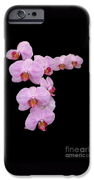Nature Scene iPhone Cases - Pink Orchids iPhone Case by Tom Prendergast