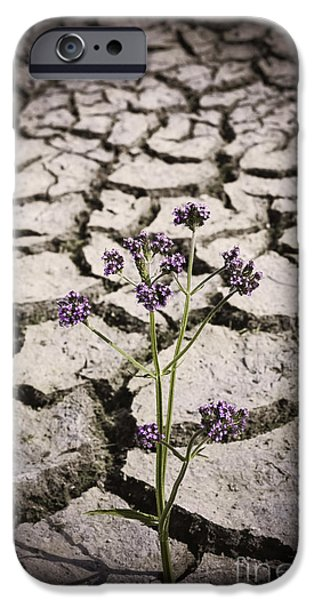 Resilience iPhone Cases - Plant growing through dirt crack during drought   iPhone Case by Ryan Jorgensen