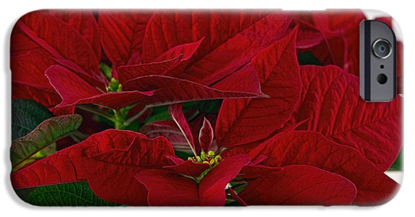 Star Of Bethlehem iPhone Cases -  Classic Poinsettia 3 iPhone Case by Sharon  Talson
