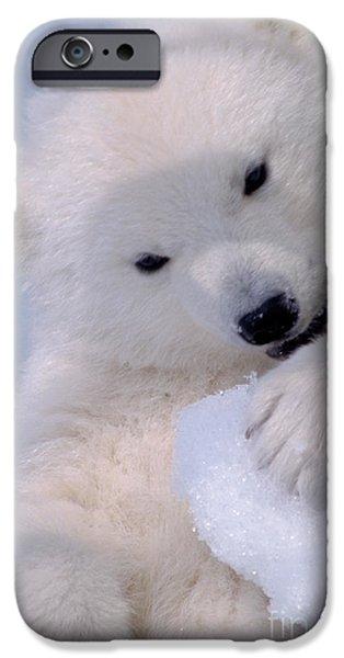 Bear Cub iPhone Cases - Polar Bear Cub iPhone Case by Mark Newman