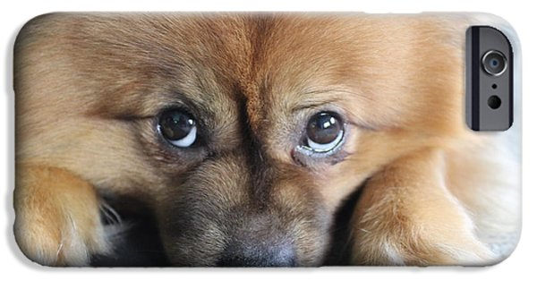 Puppy Love Framed Prints iPhone Cases - Pomeranian iPhone Case by Tegan Jarvis