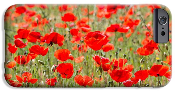 World War One iPhone Cases - Poppies in Field  iPhone Case by Chay Bewley