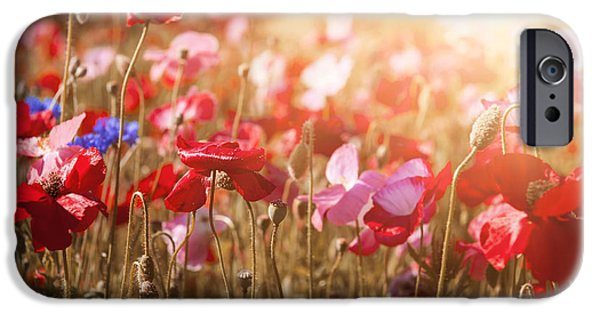 Sunflare iPhone Cases - Poppies in sunshine iPhone Case by Elena Elisseeva