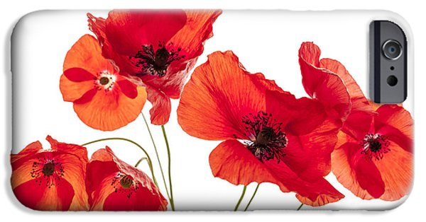 Botanical Photographs iPhone Cases - Poppy flowers on white iPhone Case by Elena Elisseeva