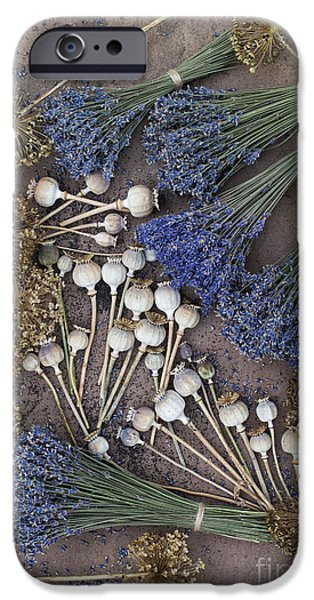 Capsule iPhone Cases - Poppy seed pods and dried lavender iPhone Case by Tim Gainey