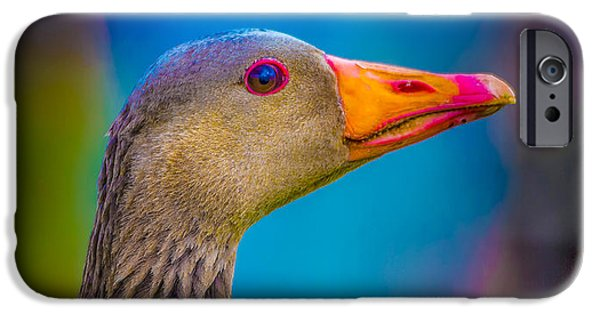Vertical Flight iPhone Cases - Portrait Of Greylag Goose, Iceland iPhone Case by Panoramic Images