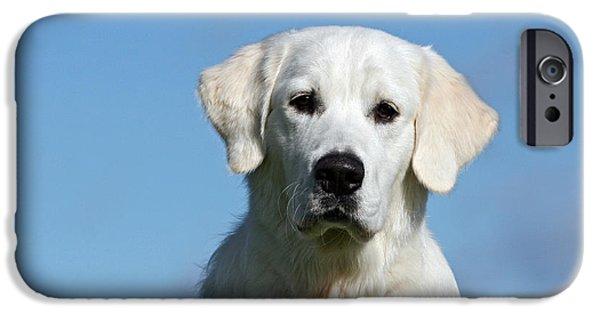 Dog Photos iPhone Cases - Portrait white Golden Retriever dog iPhone Case by Dog Photos