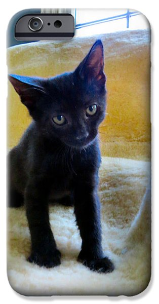 Witch Halloween Cat Wicca Photographs iPhone Cases - Posing  iPhone Case by Michelle Milano