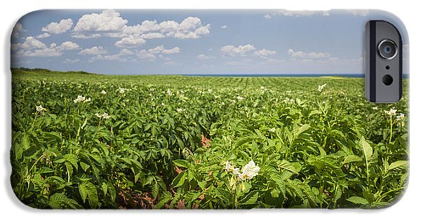 Crops iPhone Cases - Potato field in Prince Edward Island iPhone Case by Elena Elisseeva