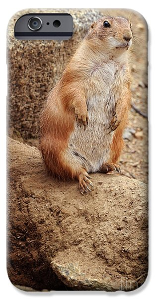 Prairie iPhone Cases - Prairie Dogs iPhone Case by HD Connelly