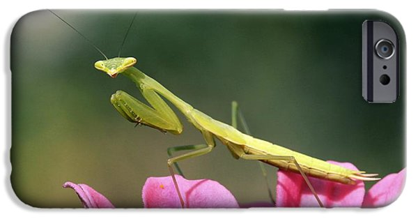 Mantodea iPhone Cases - Praying Mantis iPhone Case by PhotoStock-Israel