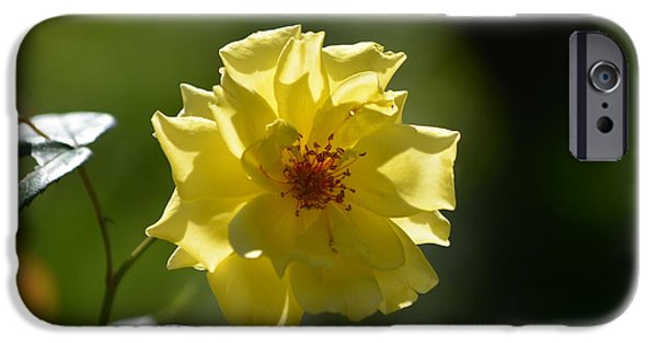 Yellow Sculptures iPhone Cases - Pretty Yellow Rose Blossom iPhone Case by DejaVu Designs
