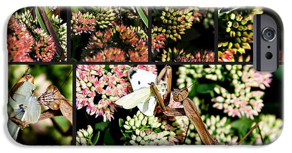 Butterfly Prey iPhone Cases - Preying Mantis iPhone Case by Lance Theroux