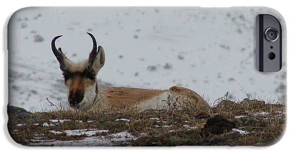 Snow iPhone Cases - Pronghorn iPhone Case by Carl Moore