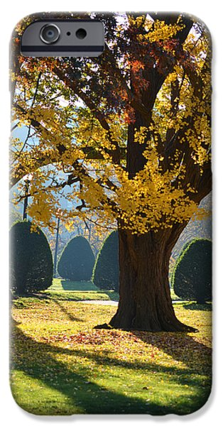 Boston Ma Digital iPhone Cases - Public Garden Fall Tree iPhone Case by Toby McGuire