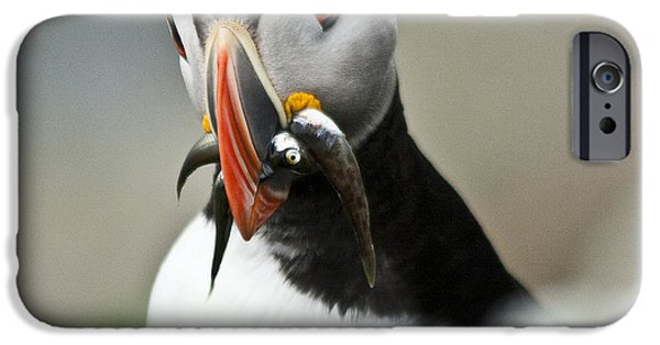 Sea Birds iPhone Cases - Puffin with fish iPhone Case by Heiko Koehrer-Wagner
