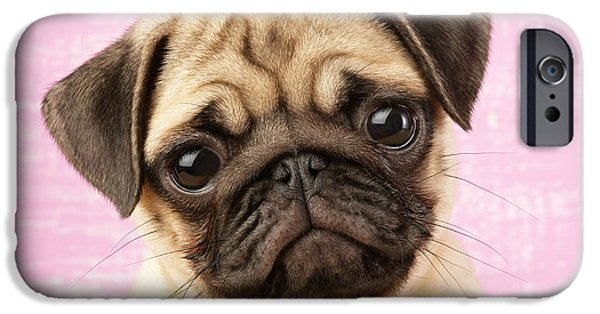 Puppies iPhone Cases - Pug Portrait iPhone Case by Greg Cuddiford