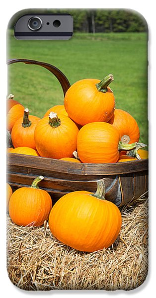 Squash iPhone Cases - Pumpkins for sale iPhone Case by Jane Rix