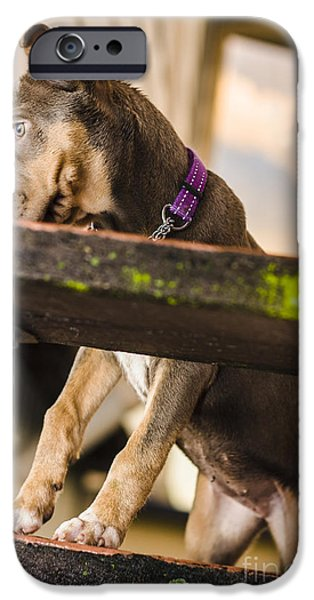 Skewed iPhone Cases - Puppy dog walking up stairs in a garden backyard iPhone Case by Ryan Jorgensen