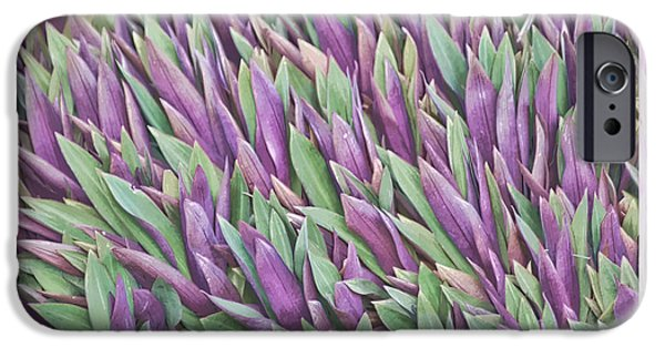 Florals iPhone Cases - Purple and Green iPhone Case by Holly Kempe