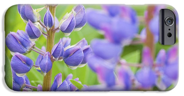 Northeast iPhone Cases - Purple Lupine Flowers iPhone Case by Keith Webber Jr