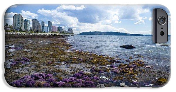 Radial Symmetry Photographs iPhone Cases - Purple Starfish On A Beach, Canada iPhone Case by David Nunuk