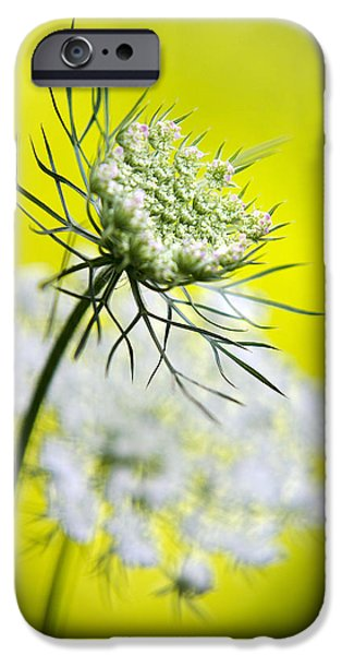 Plant iPhone Cases - Queen Annes Lace Flower iPhone Case by Christina Rollo