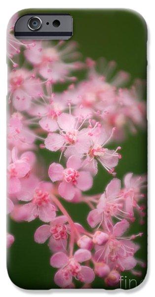 Spirea iPhone Cases - Queen Of The Prairie Filipendula Rubra iPhone Case by Maria Mosolova