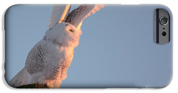 Ready To Fly iPhone Cases - Ready for Take Off iPhone Case by Cheryl Baxter